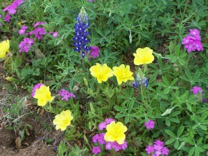 Assorted Wildflowers