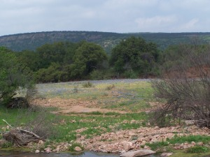 Bluebonnets and Stream